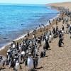 Pingüinera de Punta Tombo con Valle Inferior