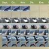 Calendario de fauna en Puerto Madryn